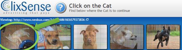 macskás kép clixsense